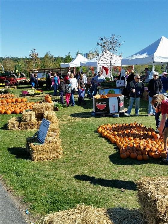 10 places to go pumpkin picking in New Jersey NJcom