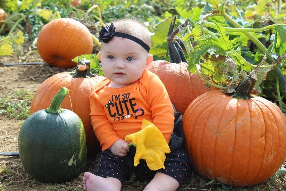 The Pumpkin Patch Hackettstown Nj Reviews